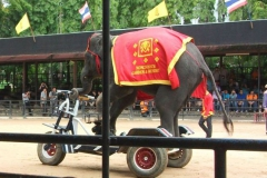 Doc-Elephant-Riding-Tricycle-
