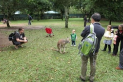 2013-ioi-kangaroo-being-admired-img_0146