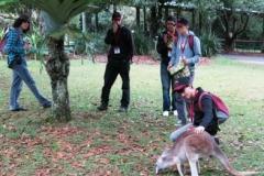 2013-ioi-paul-pets-kangaroo-img_0143